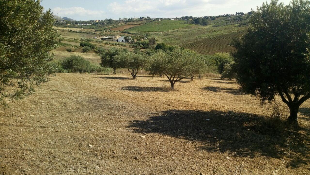 Terreno Agricolo in vendita a Alcamo, 9999 locali, prezzo € 45.000 | CambioCasa.it