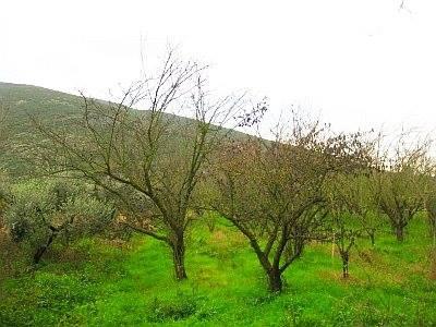 Terreno Agricolo in vendita a Fondi, 9999 locali, prezzo € 30.000 | CambioCasa.it